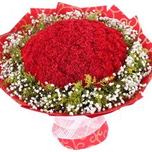紅色康乃馨,滿天星、黃鶯外圍