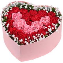 5枝粉色康乃馨,16枝紅色康乃馨,滿天星、綠葉外圍