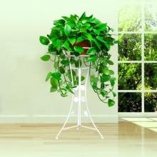 高约40cm(含盆,不含架子)中号绿萝盆栽