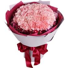 粉色康乃馨33枝,石竹梅围绕