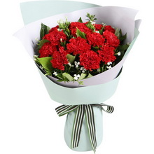 红色康乃馨12枝,白色相思梅2枝,栀子叶0.5扎