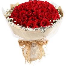 紅玫瑰66枝,滿天星圍繞