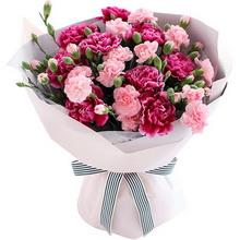 紫紅色康乃馨9枝,粉色多頭康乃馨10枝