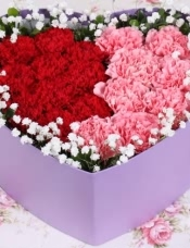 精心挑选18朵红粉康乃馨,搭配栀子叶和满天星,美丽迷人