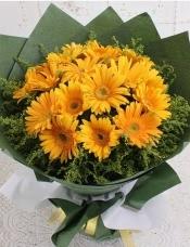 16朵优质黄色扶郎,黄莺外围,美丽迷人