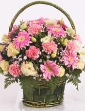 11朵粉色康乃馨,扶郎、石竹梅、桔梗丰满