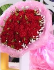 33朵红康乃馨,满天星黄莺搭配