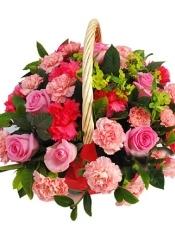 桃红色玫瑰10枝,红康乃馨10枝,粉色康乃馨30枝,绿叶适量