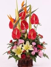 精心挑选6片优质红掌,3支天堂鸟,黄百合,钻石玫瑰,剑叶,绿叶点缀,构建完美花蓝。