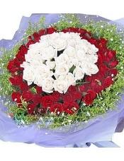 99枝双色玫瑰:里面白玫瑰,红玫瑰围绕