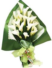 20枝白马蹄莲(12月到次年5月花期)