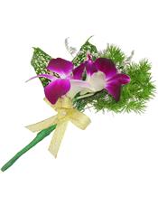 紫阳兰2支,星点木,蓬莱松、情人草少许。(10个起订)