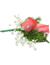 粉玫瑰2枝,星点木,蓬莱松、情人草少许。(10个起订)