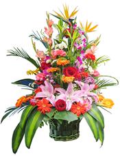 �t玫瑰、粉百合、橘色太�花、�t色太�花、�t色和粉色康乃馨、天堂�B、洋�m、散尾葵、巴西木�~、�G�~�g插