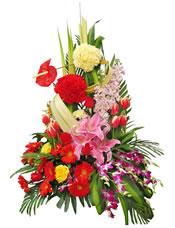 粉色百合、红色太阳花、红色郁金香、红色和黄色康乃馨,金鱼草、洋兰、龟背叶多种绿叶间插