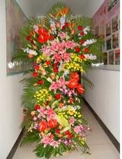 大鸟5枝,红掌8片,粉百合18朵,粉玫瑰16枝,红玫瑰24枝,紫罗兰10枝,跳舞兰20枝,泰国兰10枝。