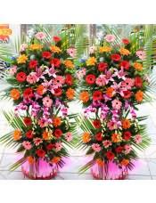 精品红色扶郎花、粉色扶郎花、橘色扶郎花、1支多头粉百合,搭配适量散尾葵、栀子叶、洋兰,类型 :单个花篮