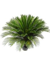 铁树,铁树是一种古老而名贵的观赏植物,其树形古朴端庄,叶若凤尾坚挺常绿。