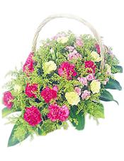 桃红色康乃馨18枝,黄色康乃馨13枝,多头康乃馨15枝,黄莺1扎,巴西木10片。