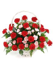 33枝红色康乃馨,15枝多头粉色康乃馨,绿叶间插,排草