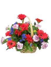 10支红色非洲菊+10支紫色康乃馨+配叶