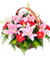 6枝粉色多头香水百合,9枝红色扶郎,巴西木叶、芒叶环绕,栀子叶间插