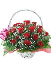 33枝红色玫瑰,满天星、绿叶间插丰满