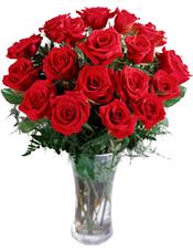 24只�t色玫瑰
