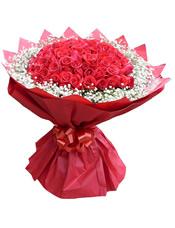 66枝红玫瑰,满天星围绕