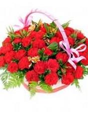 33枝红色康乃馨,配叶丰满