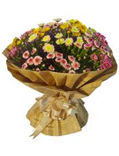 各色小雏菊(因属特殊花材,需提前三天以上预订)