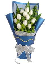 11枝白玫瑰,巴西叶、叶上黄金丰满。