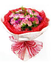 21枝粉色康乃馨,石竹梅、黄英间插