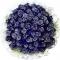 66枝蓝玫瑰