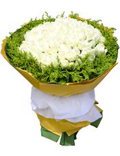 99枝白玫瑰,黄英围边