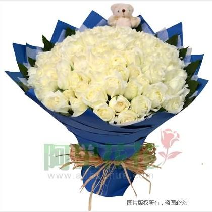 099枝玫瑰花/白玫瑰