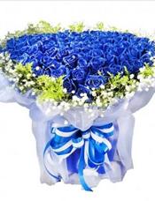 99枝蓝玫瑰,满天星、绿叶围边