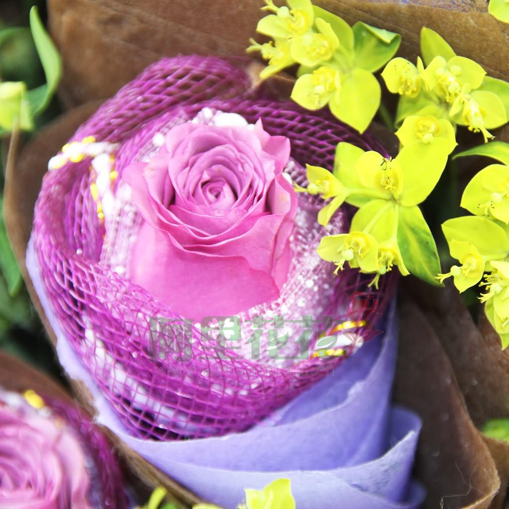 玫瑰花 紫玫瑰