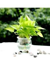 水培盆栽 室内盆景植物 防电脑辐射创意办公绿植