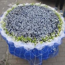 999朵蓝玫瑰