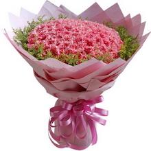 99枝粉色康乃馨,外圍黃鶯搭配豐滿