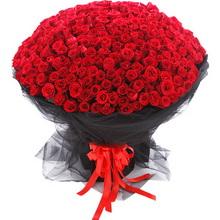 365枝红玫瑰图片
