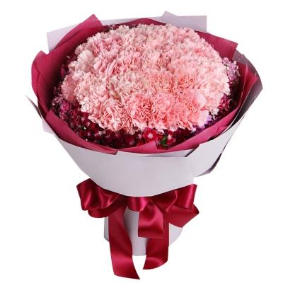 粉色康乃馨33枝图片