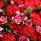 红色康乃馨66枝图片