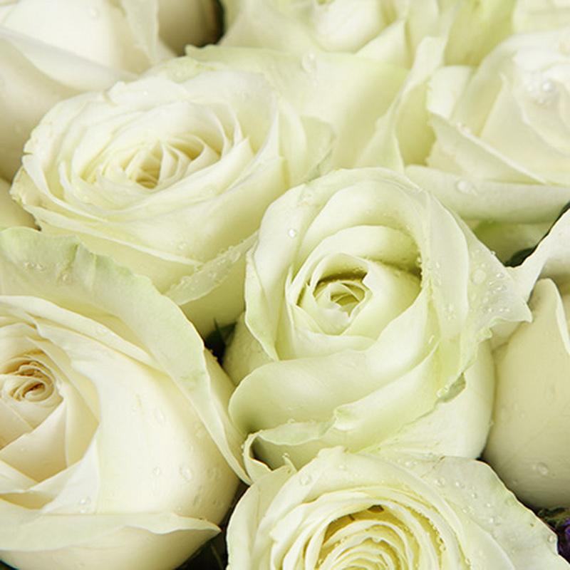 雪山白玫瑰19枝图片
