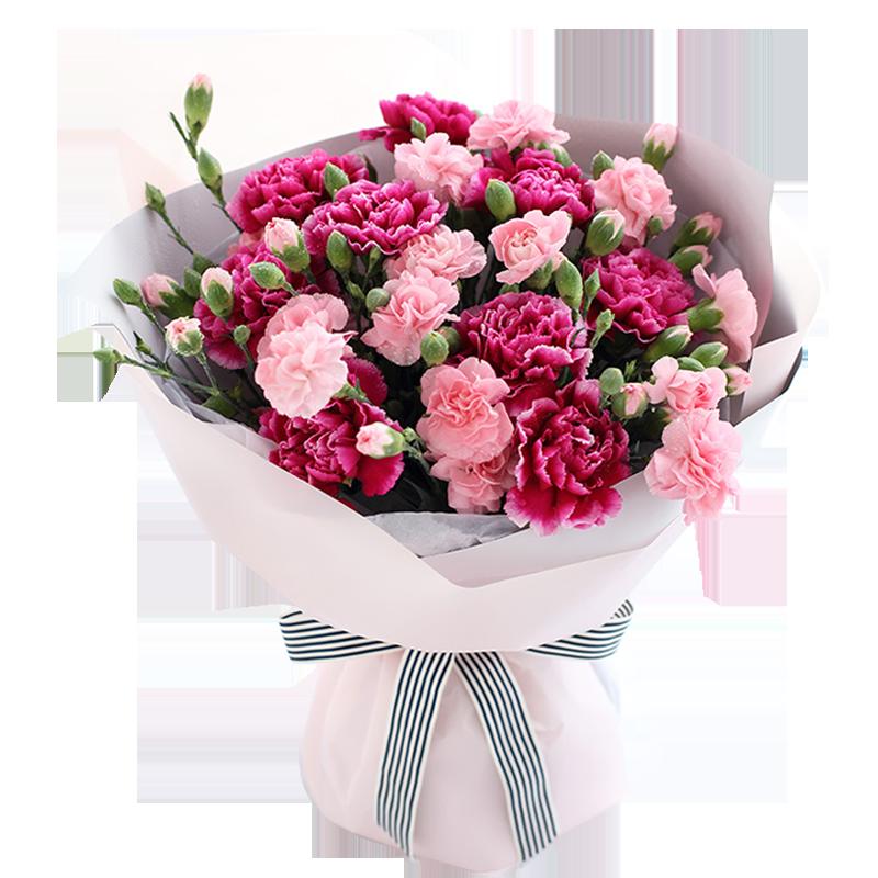 紫红色康乃馨9枝,粉色多头康乃馨10枝图片