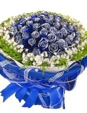 99朵蓝色妖姬,满天星, 黄英点缀,蓝色皱纹纸,蓝色纱网高档圆形包装。系精美蝴蝶结。