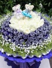 精心挑选33朵白玫瑰,66朵蓝色妖姬,2只小熊黄莺,满天星外围,美丽迷人