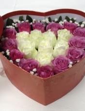 紫玫瑰加白玫瑰21朵  满天星点缀  绿叶外围