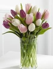5枝粉色郁金香,5枝白色郁金香,5枝紫色郁金香搭配而成,玻璃花瓶